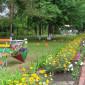 Кемеровский дом-интернат растения на территории