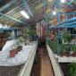Кемеровский дом-интернат растения