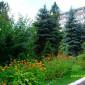 Светлогорский социально-оздоровительный центр «Мечта» деревья на территории