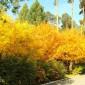 Уктусский пансионат желтые деревья