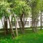 Уктусский пансионат сад