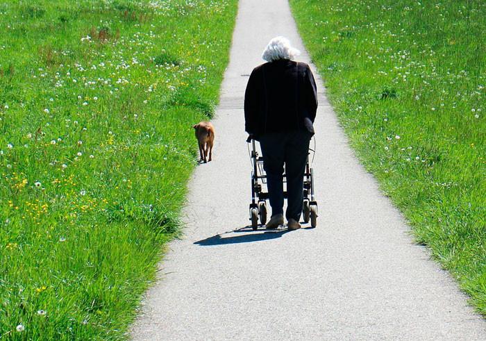 Ходунки для пожилых и инвалидов: все, что нужно знать
