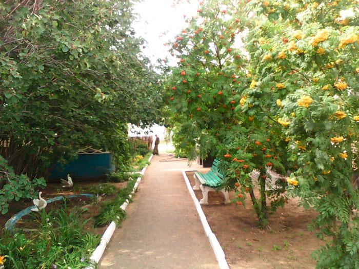 Сад на территории интерната