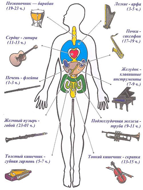 Влияние музыкальных инструментов на организм человека