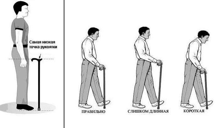 Инструкция по выбору трости