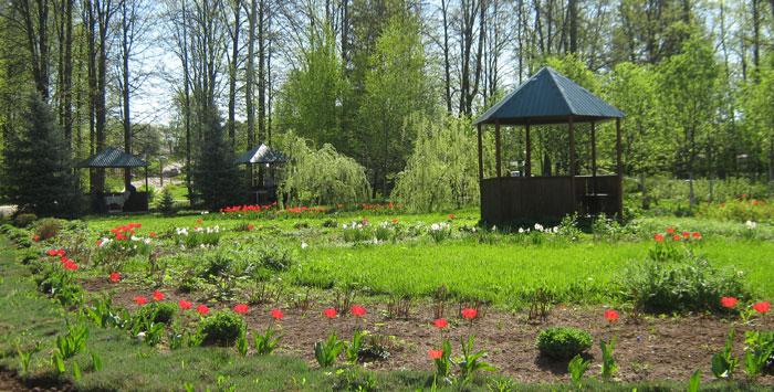 Территория дома-интерната для престарелых «Сосновая роща»