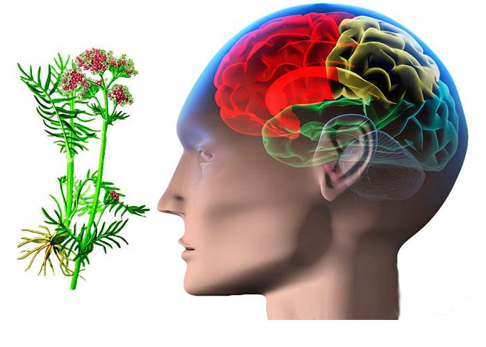 Лечение эпилепсии народными методами