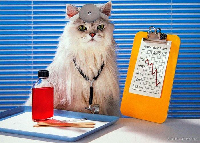 Фелинотерапия, как лечат кошки