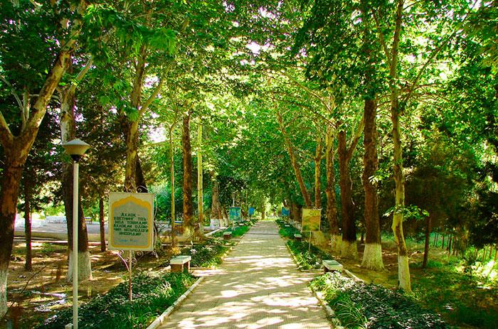 Территория санатория «Ботаника» (Узбекистан)