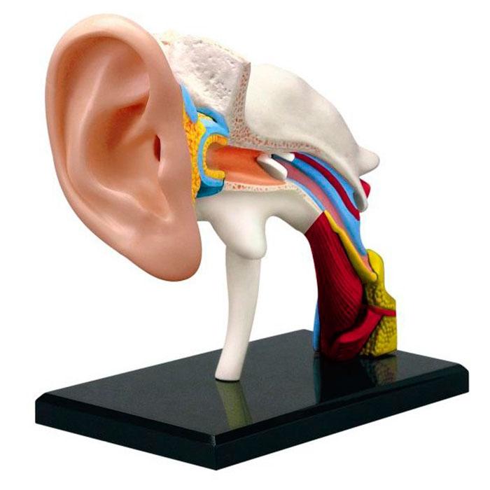 Атерома мочки уха: лечение народными средствами