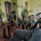 Зеленый уголок в пансионате для пожилых «Забота и Уют» (Харьков)