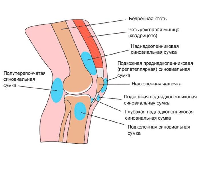 Строение бурсита коленного сустава