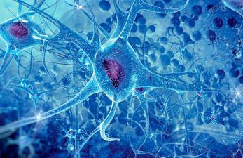 Болезнь Крейтцфельдта-Якоба: пути заражения опасным заболеванием