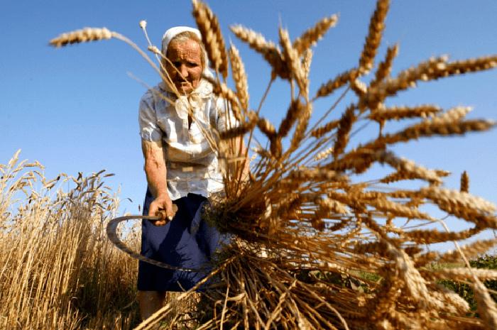 Пенсия сельским пенсионерам в 2019 году: есть ли надбавка для жителей сельской местности?